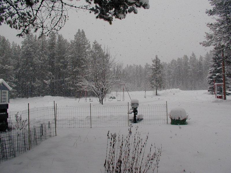 Just a snowy day.jpg