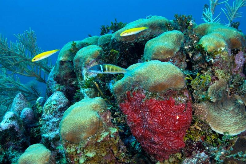 Red Encrusting Sponge