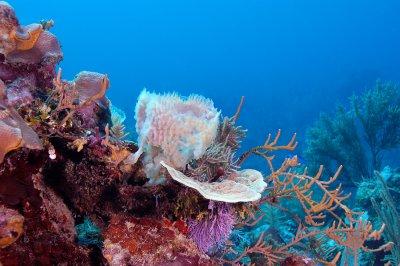 Vase Sponge With Coral