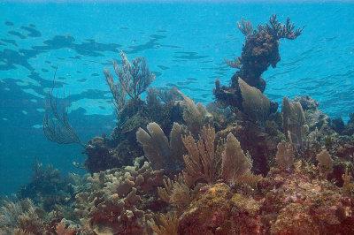 Coral Seascape