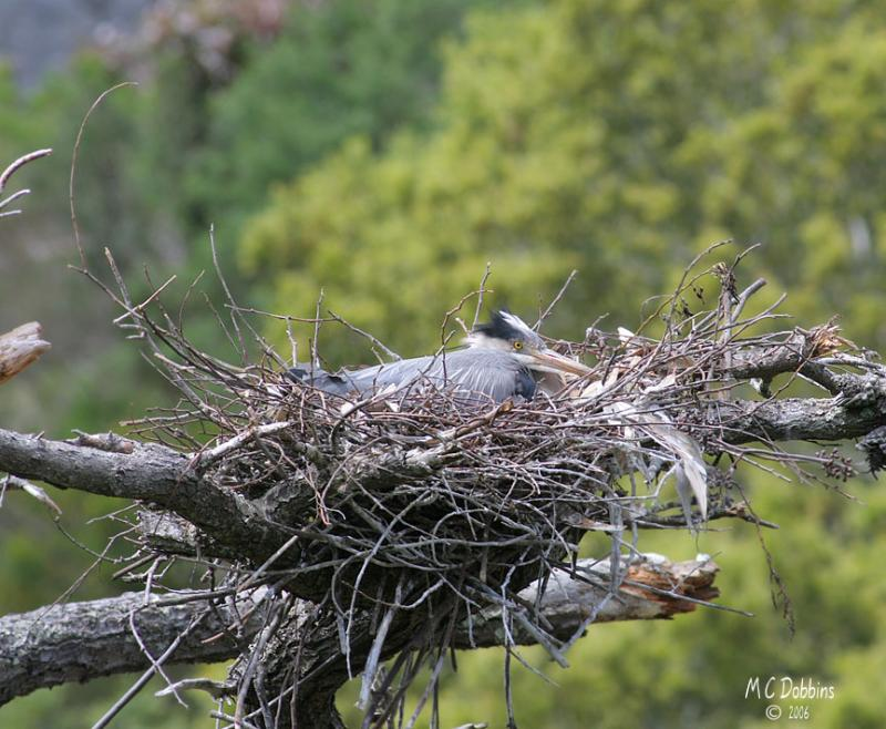 Sitting on the nest in the wind