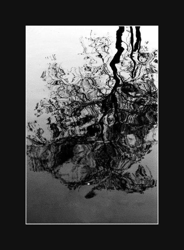 black reflection