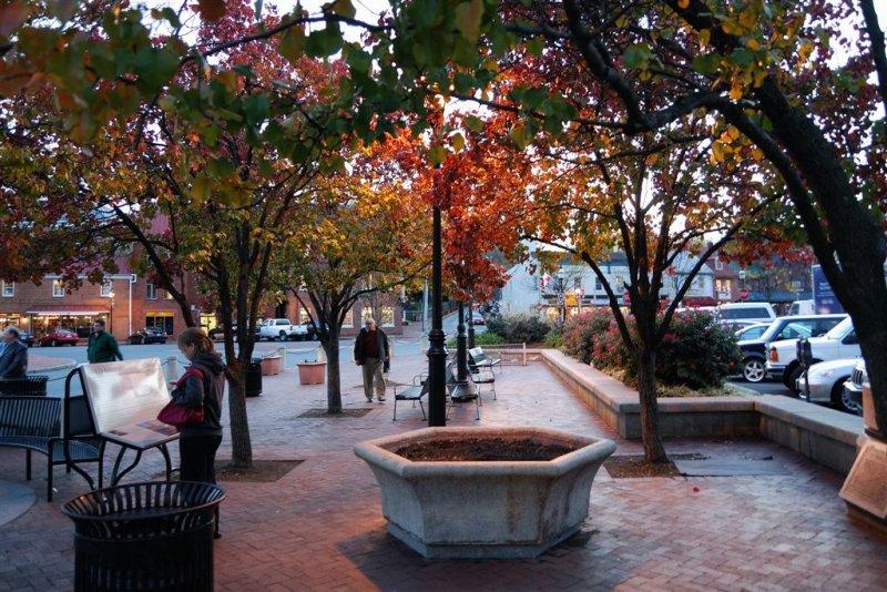 Tree Light - Annapolis MD