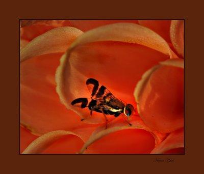 fly on orange 08_tn.jpg
