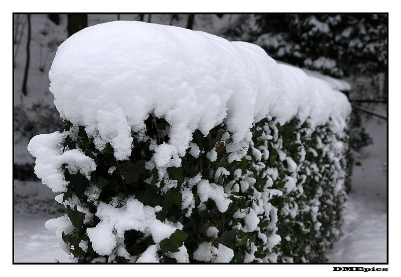 18 december 2009.jpg