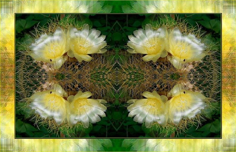 Succulent Suchness