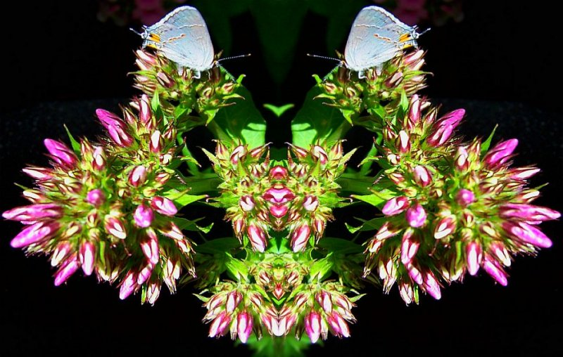 Phlox Moth Mask