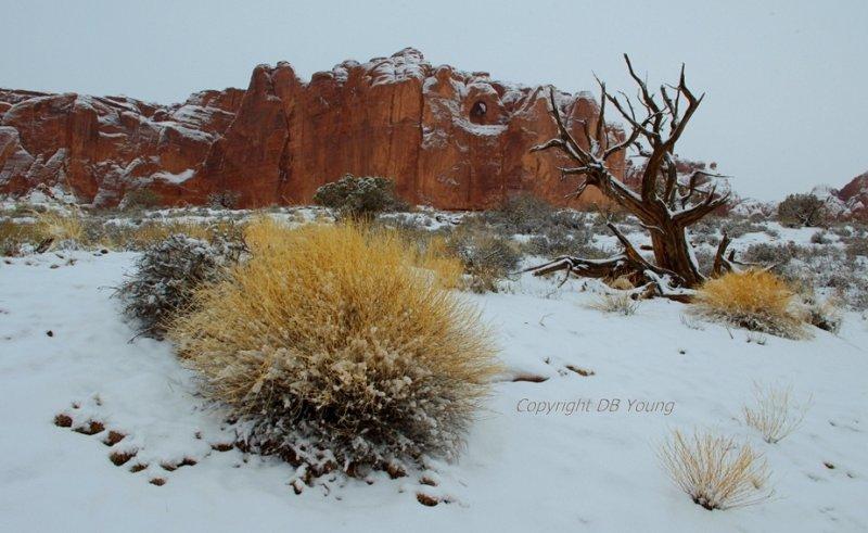 Snowy desert.JPG