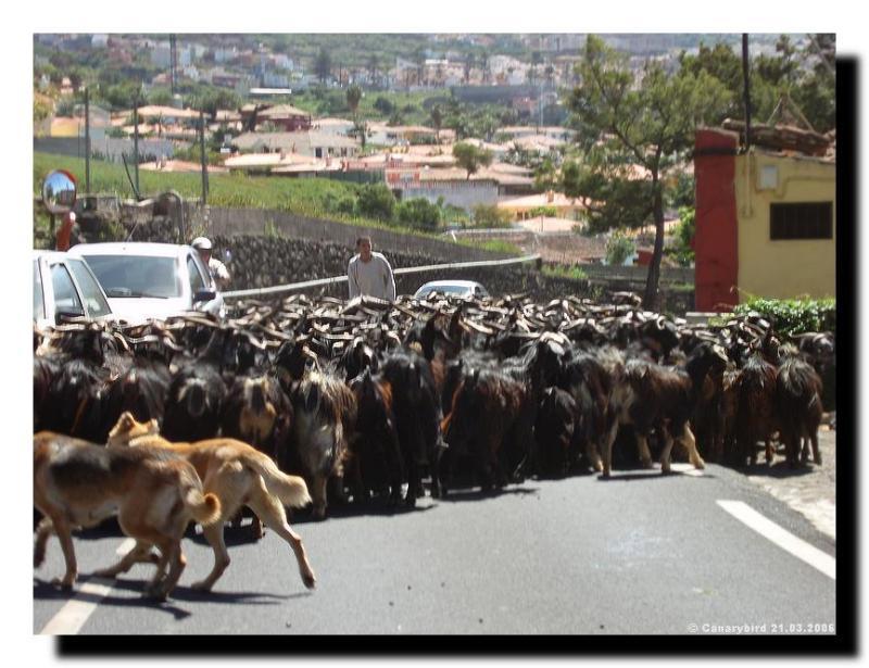 Traffic coming this way.JPG