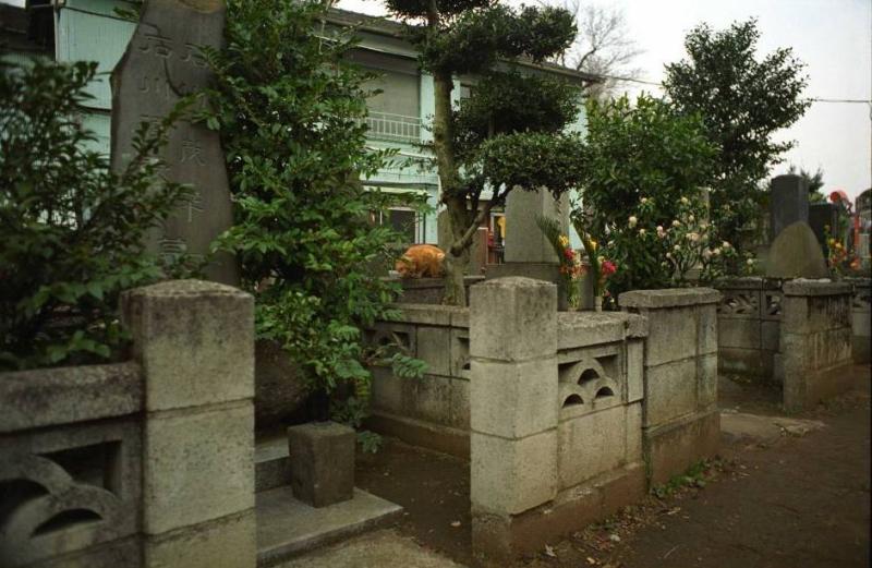 Cementary cat