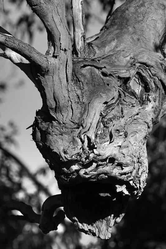Gum Tree Gargoyle.jpg