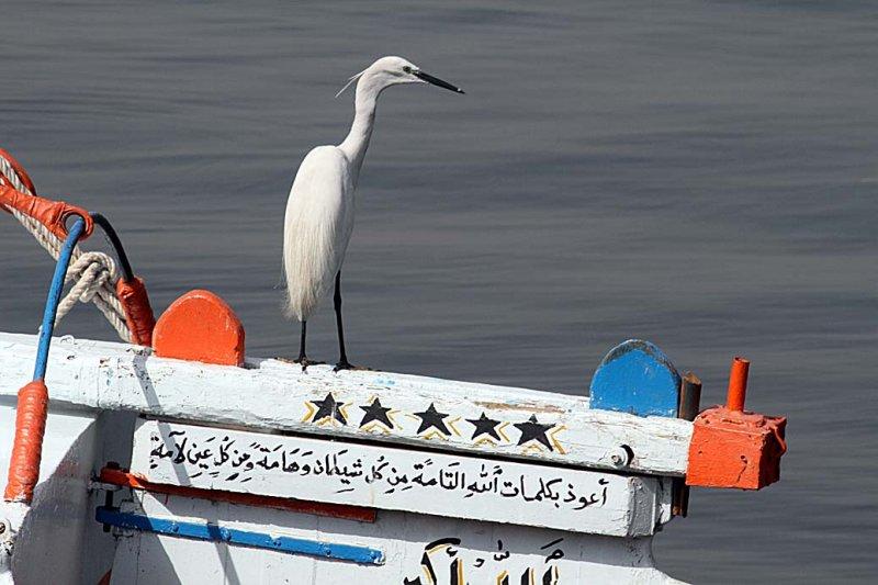 Luxor_10_211.jpg