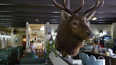 Elk, Forks Café, Forks, Washington, 2009