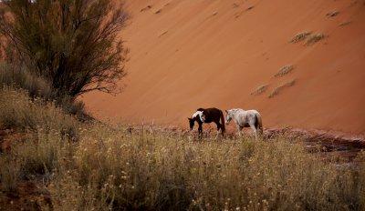 Navajo ponies, Monument Valley, Arizona, 2009