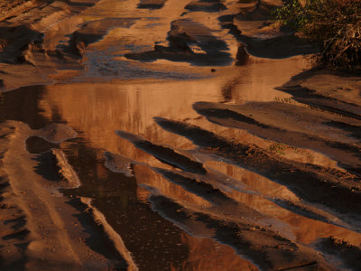 Golden puddle, Canyon de Chelly National Park, Arizona, 2007