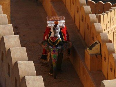 Painted elephant, Amber Fort, Jaipur, India, 2008