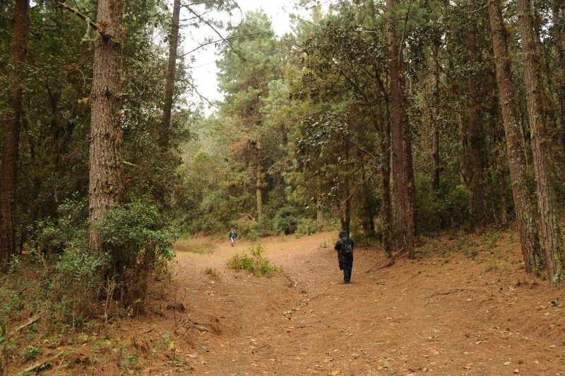 High elevation Pine-oak