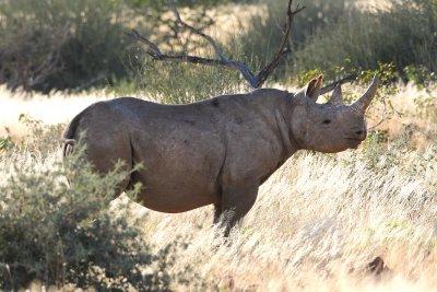 Stalking Black Rhino On Foot.jpg