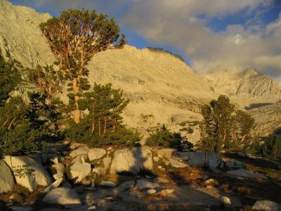 Large Whitebark pine at Lower Mills Lake in Second Recess