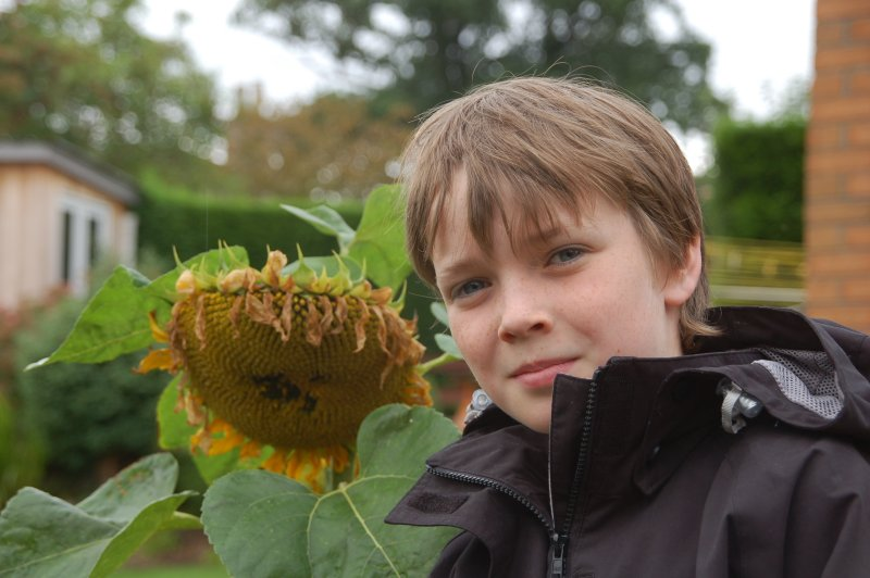 7th September 2008 <br> Grandmas sunflower
