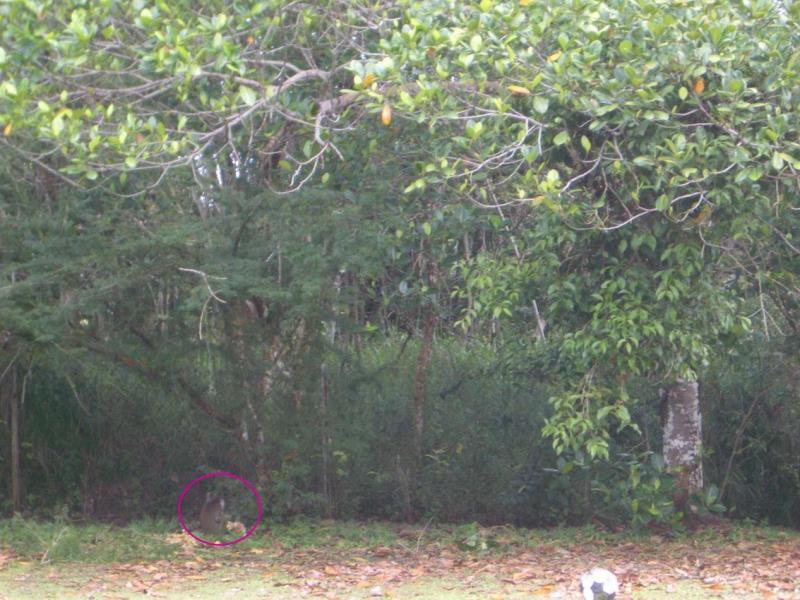 MonkeyInTurtonBackYardBrunei2006-02-13 040.JPG