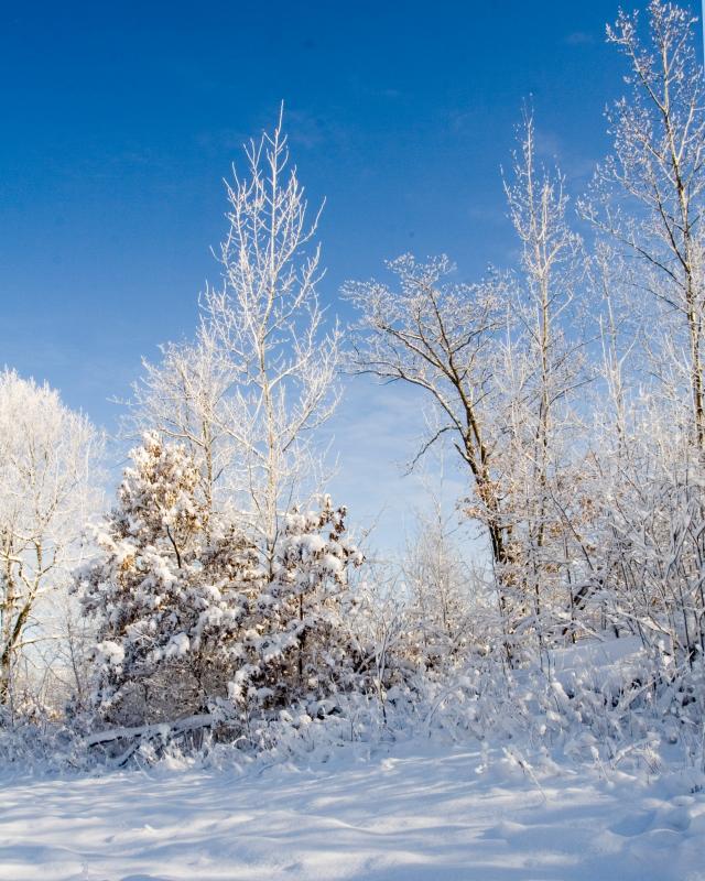 Welch_snow 28_pp.jpg