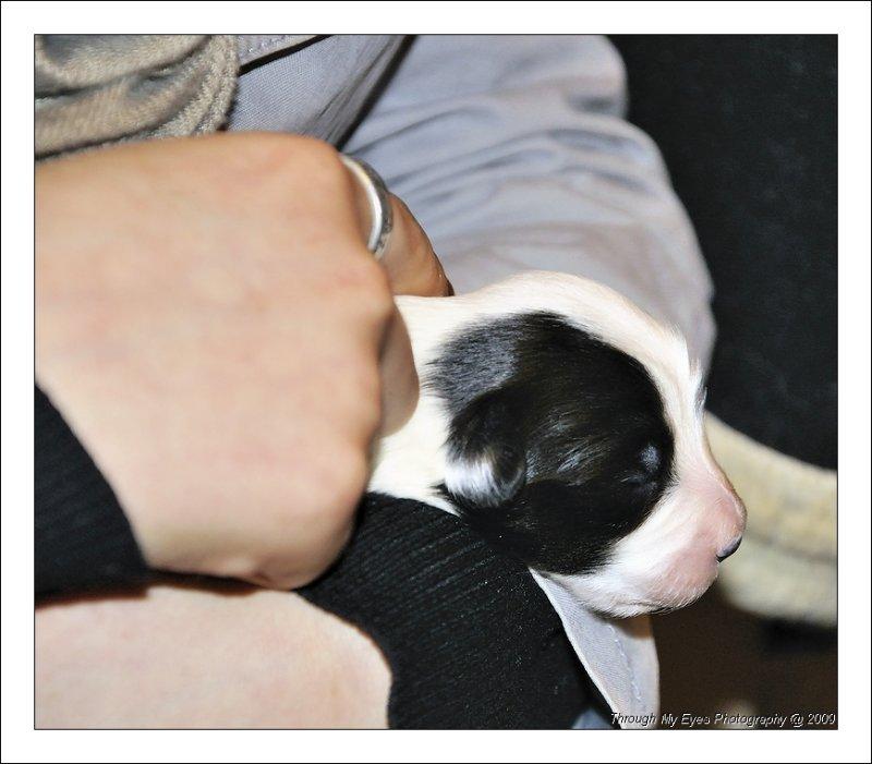 Baileys Puppy