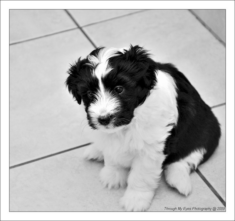 Baileys Puppy at 5 weeks