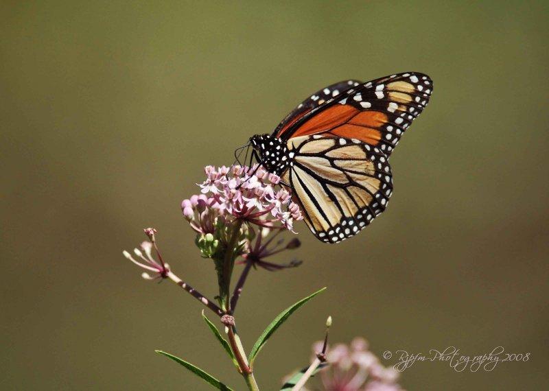 Monarch Meadowlark Va