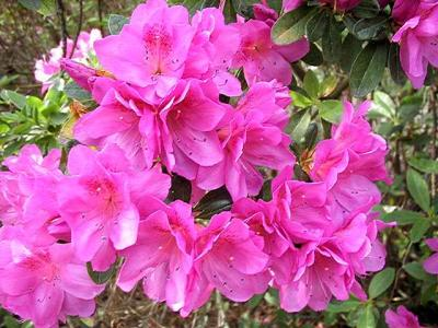 Orchid Empress *