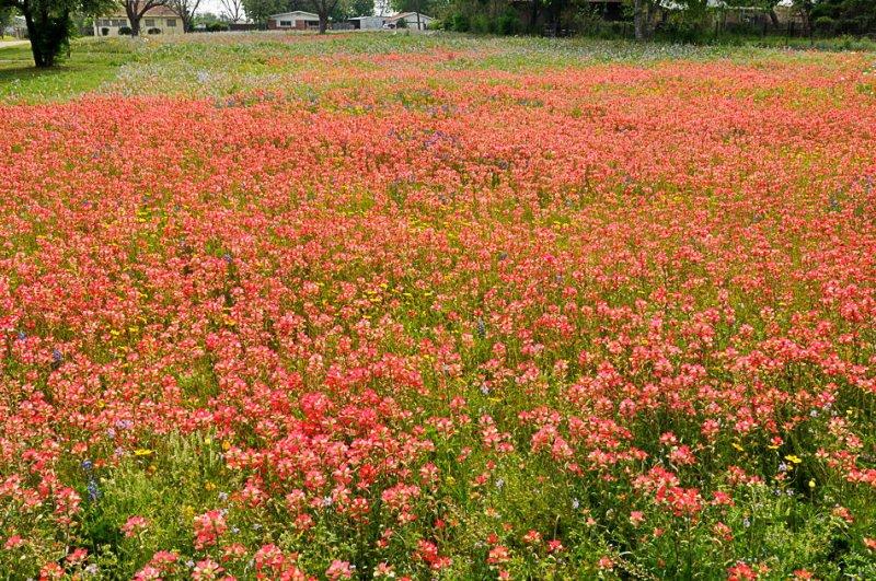 APR_0424 Wilson County, Texas