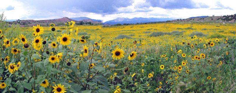 Roadside_Gardner Colorado