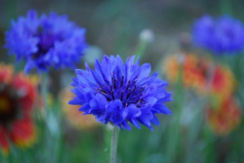 flowers _037.JPG