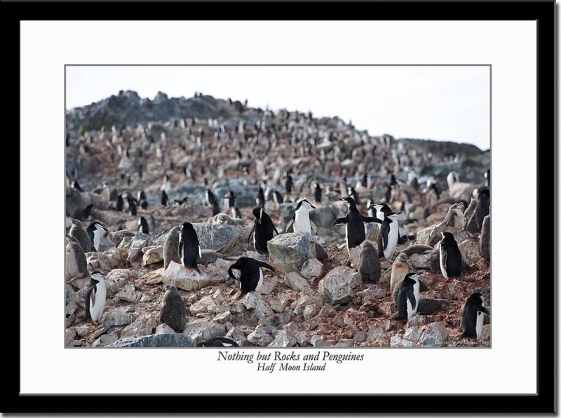 Nothing but Rocks and Penguins