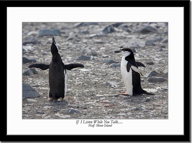 Penguins Conversation