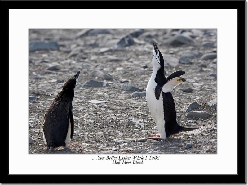 Penguins Conversation 2
