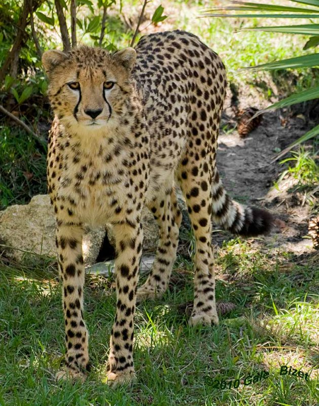 Leopard4841.jpg