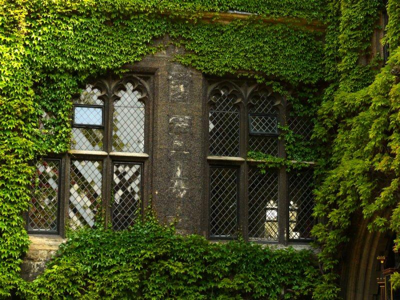 Ivy Westminster web.jpg
