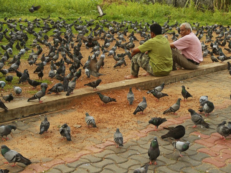 Chat with pigeons.jpg