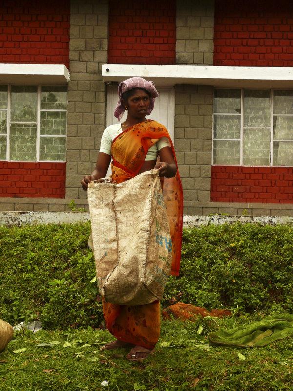 Tea picking woman.jpg