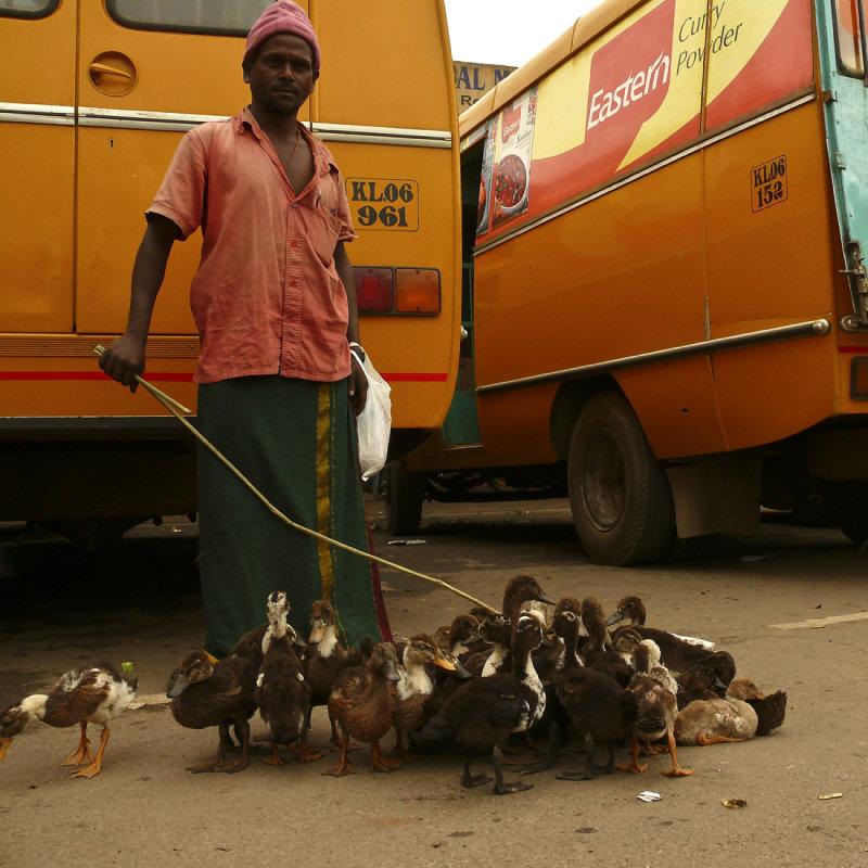 Duck walker.jpg