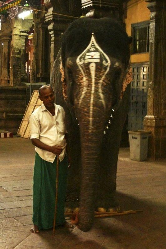 Temple elephant Madurai 2.jpg