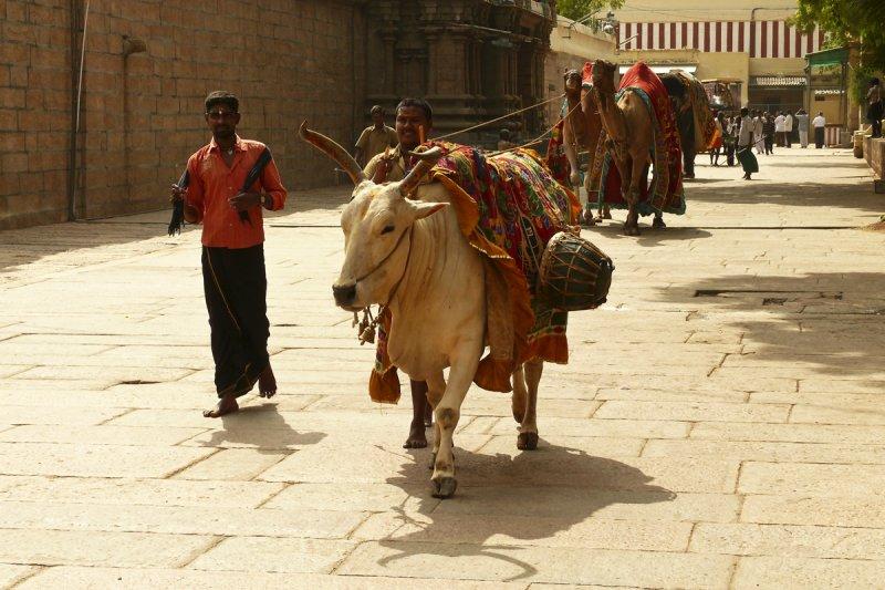 Temple Madurai with animals.jpg