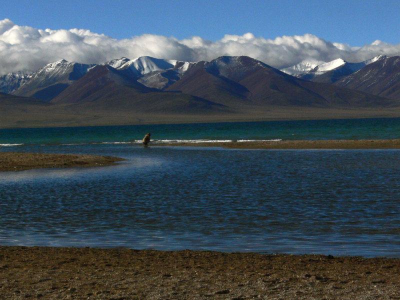Lone person Lake Namtso