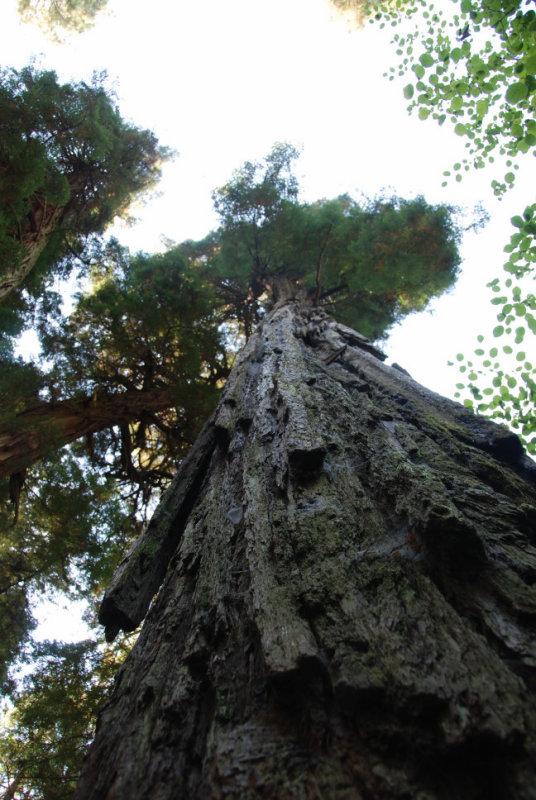 DSC_0298 Muir Woods.jpg
