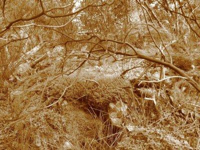 Fallen branches.