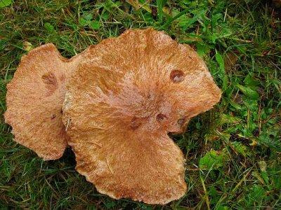 Packman mushrooms.