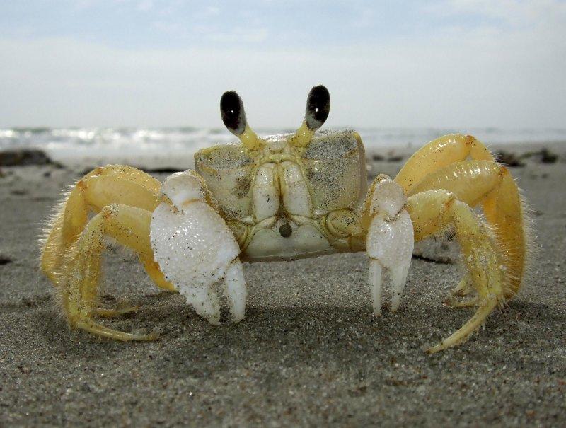 Not so crabby