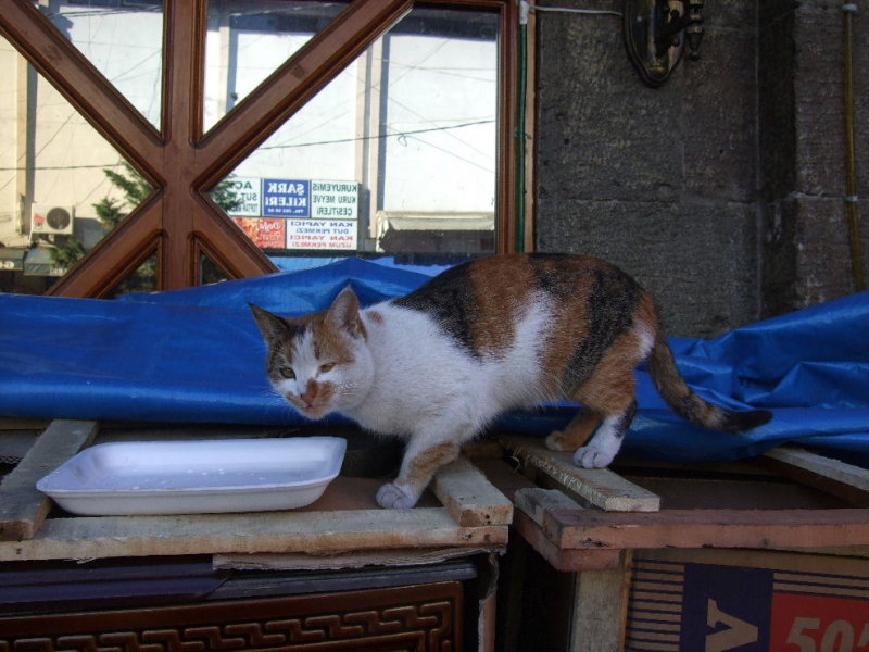 Cat at the Trabzon Pazar.