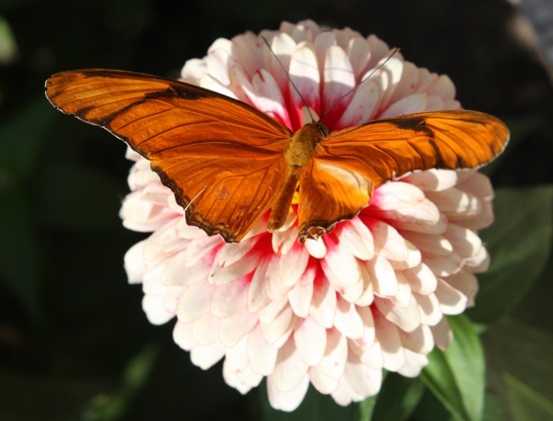Garden Jewel